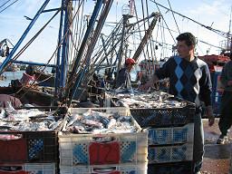 Fiskhamnen i El Aaiún. Foto: Lena Thunberg